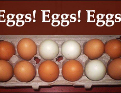Eggs! Eggs! Eggs!