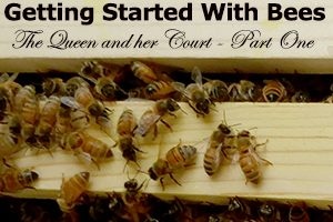 Getting Started With Bees