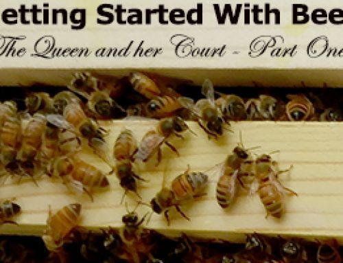 Getting Started With Bees – The Queen and her Court – Part 1