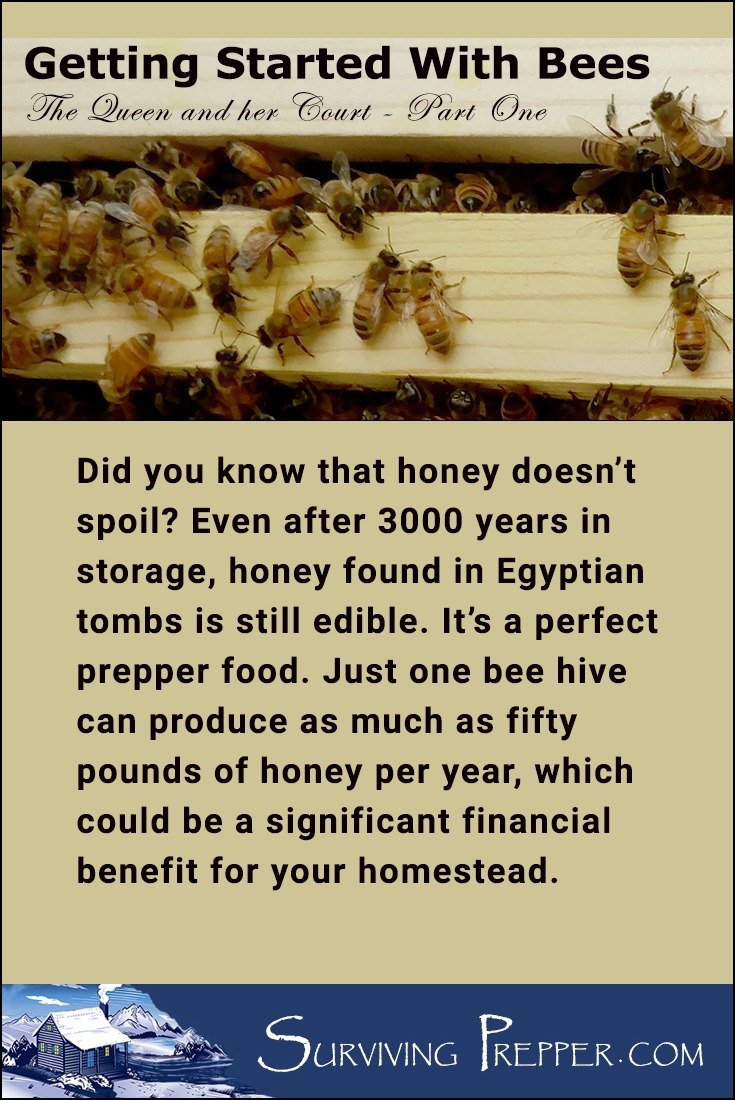 Honey will keep forever. And, since one bee hive can produce 50lbs of honey per year, honey is an ideal prepper food that can be used for consumption or trade.