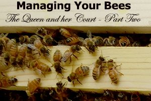 Managing Your Bees