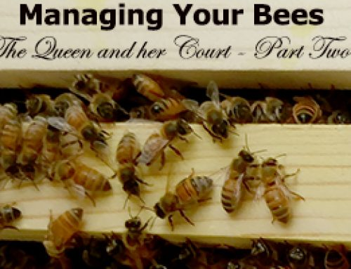 Managing Bees – The Queen and her Court-Part 2