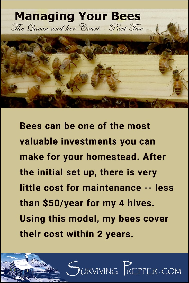 Bees can be a valuable investment for your homestead. Here are some tips, tricks and lessons for maintaining hives and bee yard.