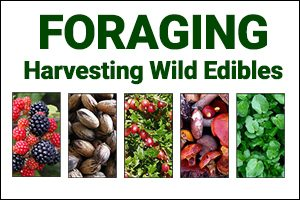 Foraging: Harvesting Edibles