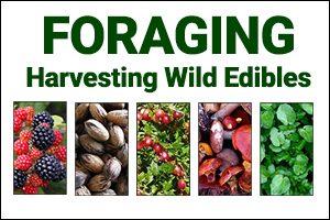 Foraging: Harvesting Edibles
