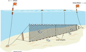 Gill net Drawing