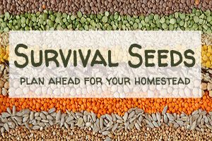 Survival Seeds