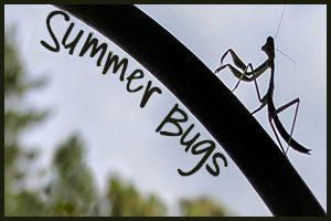 Summer Bugs